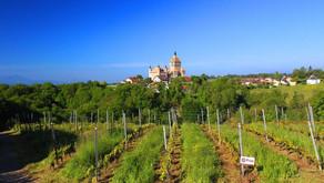 Du nouveau dans le bio ? (5/5) - Vin Nature : vers des pratiques viticoles innovantes ?