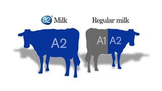 A2 Milk TVC