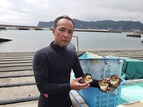 獲れたてずっしり太平洋の恵み!獲れたて直送、房総サザエ2kg(送料別)