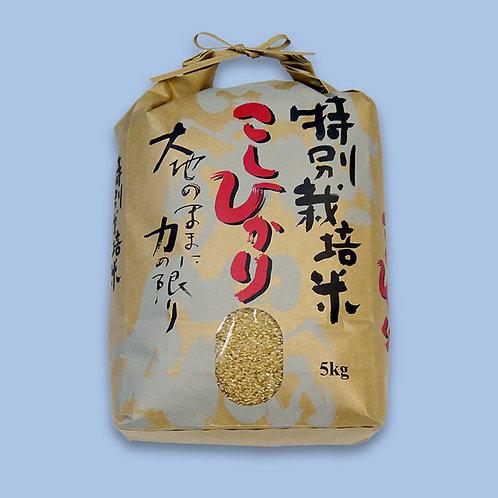特別栽培米(玄米)5kg(送料別)