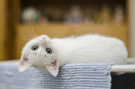 kitten-1285341.jpg
