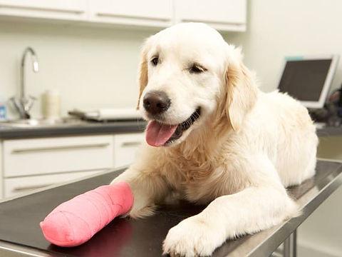 dog-leg-surgery-Thinkstock170082187.jpg