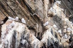 Bird colony