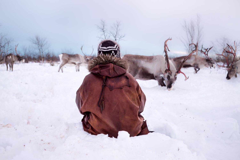 Feeding reindeers