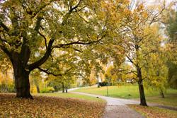 St Hanshaugen park