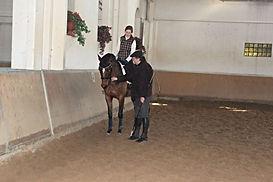 Кизимов, верховая езда, конный клуб, конно спортивный клуб, работа в рукак, конно спортивный, выездка, конкур, конный спорт, лошади, школа верховой езды, про лошадей, Totilas, Edward Gal, Grand Prix, Equestrian, dressage, work in hand, Kizimov