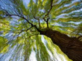 parental rss tree.jpg