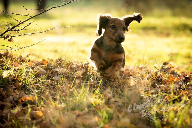 aa Opie - Film Free Photography - 008.jp