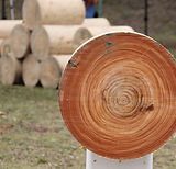 Sawing block blackbutt show 2017.jpg