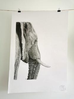 Elephant A2