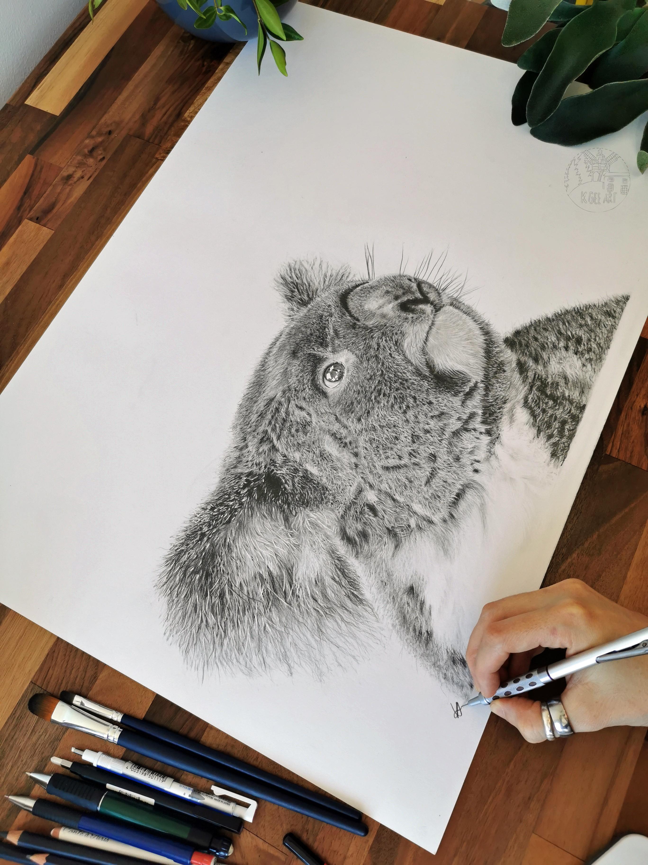 Koala A2