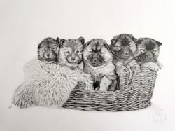 Puppy Basket A2
