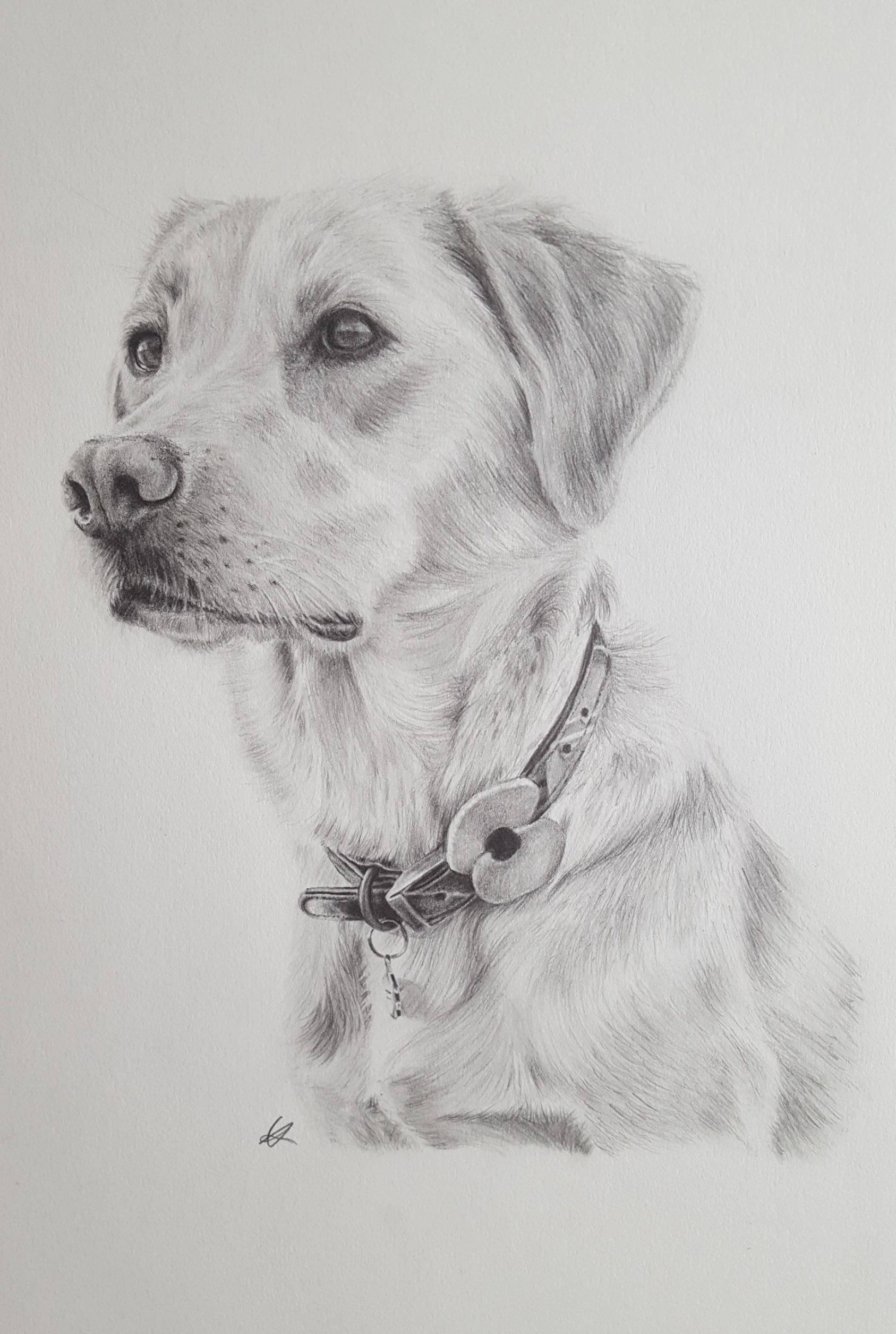 A3 Pet Portrait