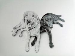 Pet Portrait A4