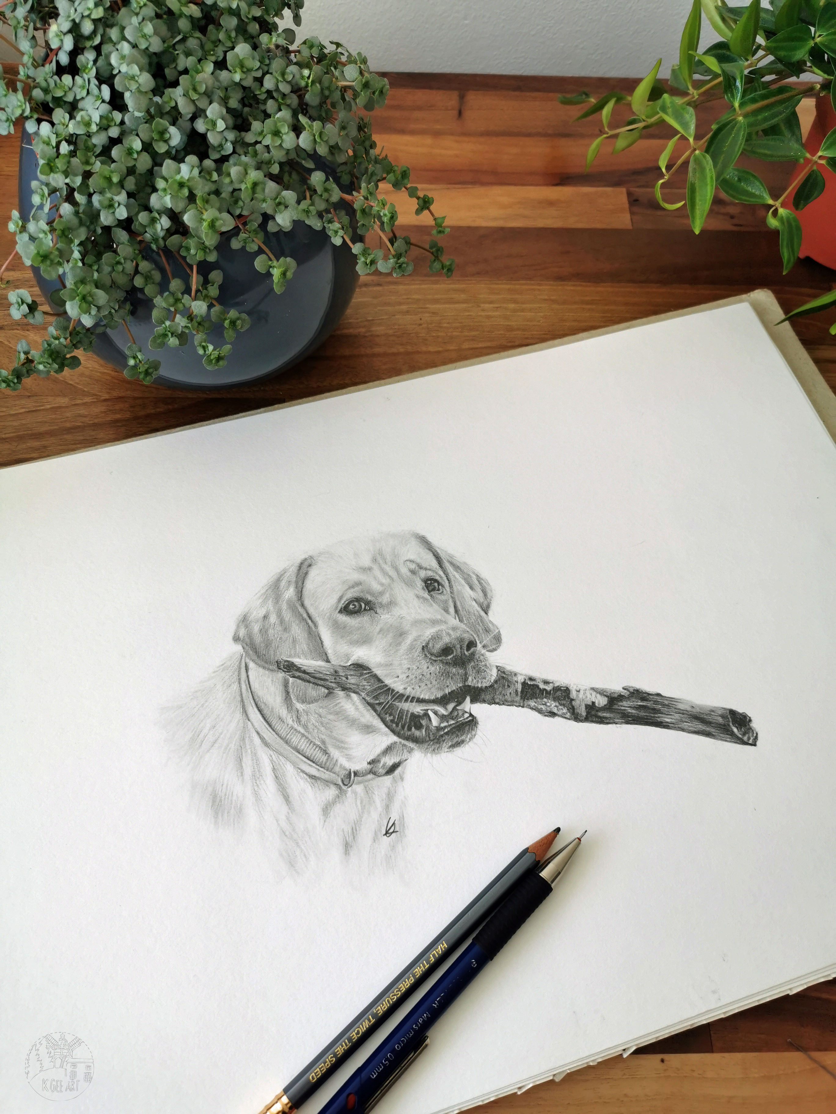 Dog A3