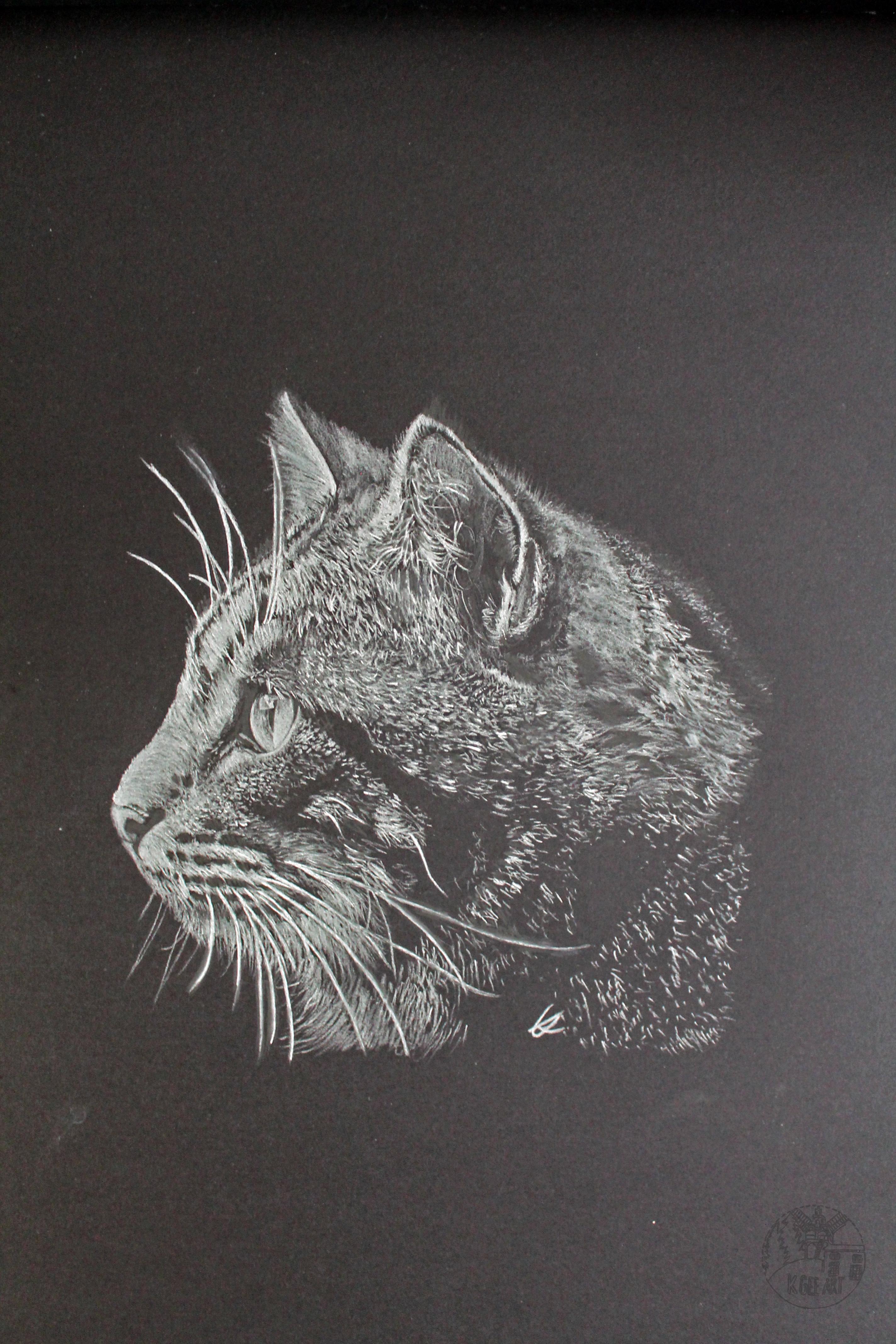 Cat A3