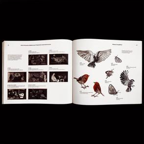 Le-cantique-des-oiseaux-7.jpg
