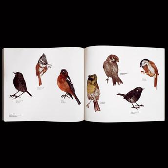 Le-cantique-des-oiseaux-6.jpg