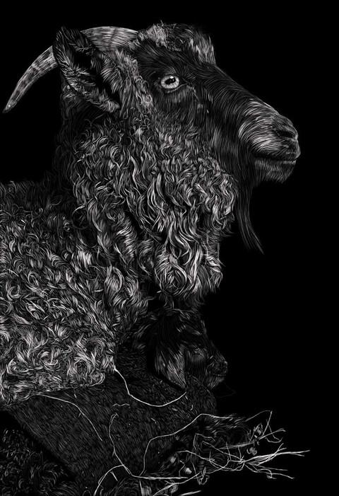 GoatCutenessSkratchboard-LowRes.jpg