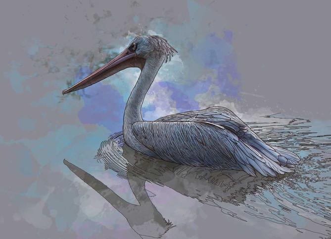 Shields-Contour-Stork.jpg