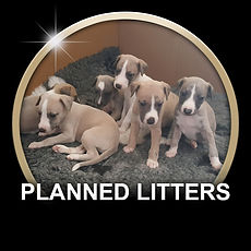 PLANNED LITTERS BUTTON.jpg