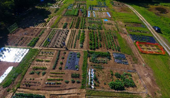 garden drone 3.JPG