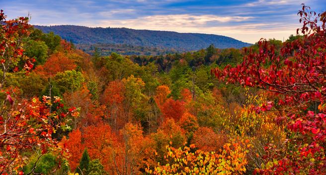 Overlook Trail Fall 2020.jpg