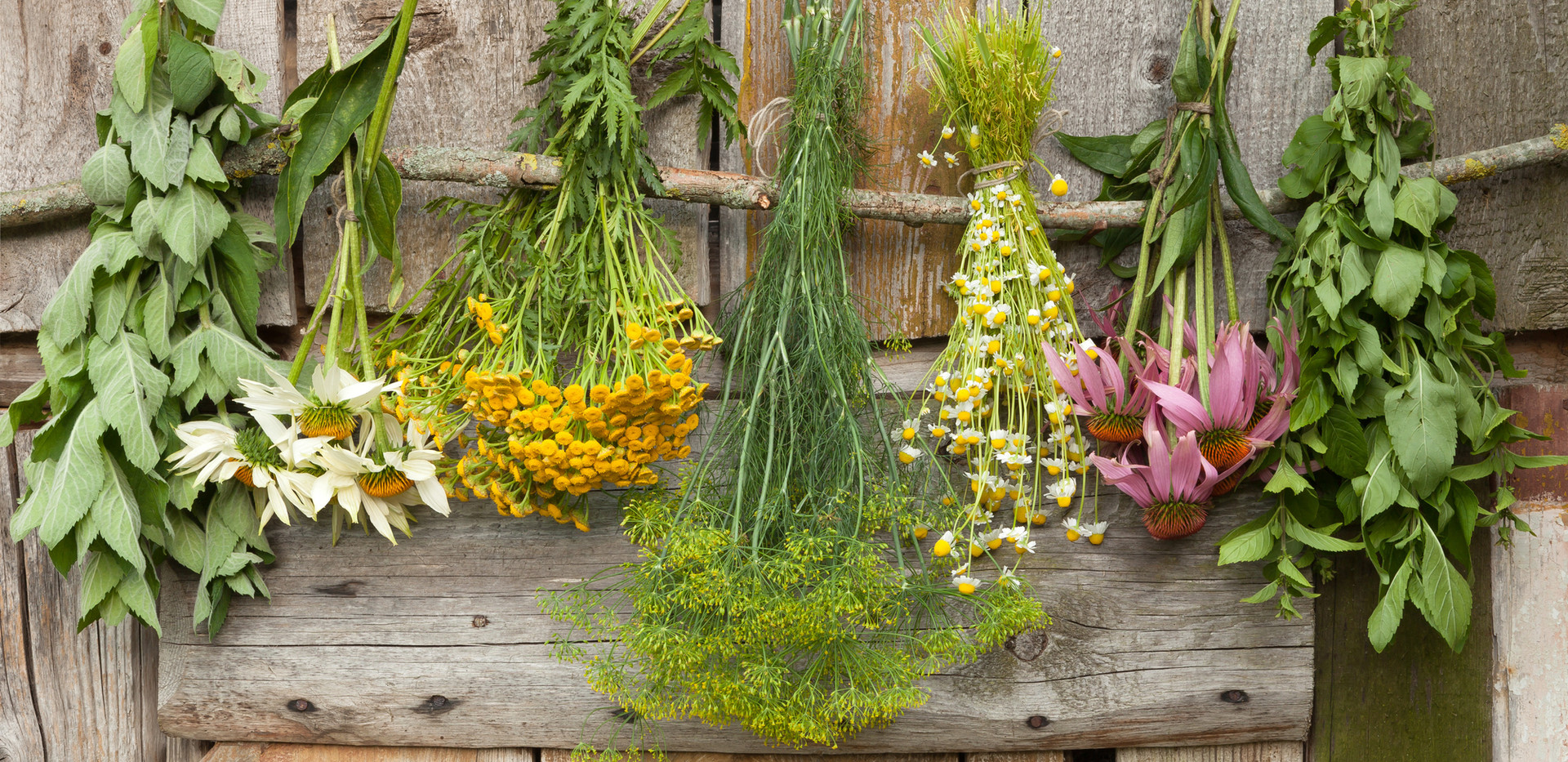 Drying Herbs.JPG