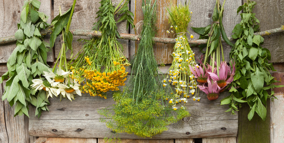 Drying Herbs.JPG