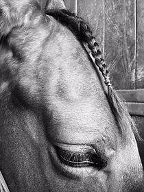 Avant course de chevaux - IENA