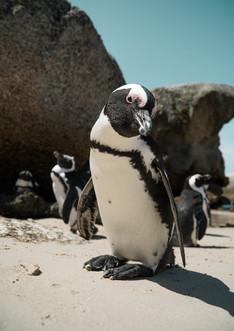 penguins original (2 of 2).jpg