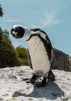 penguins original (1 of 2).jpg
