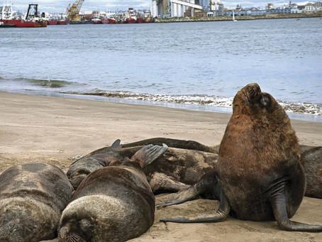 ¿Funcionó la prueba piloto turística en Mar del Plata?