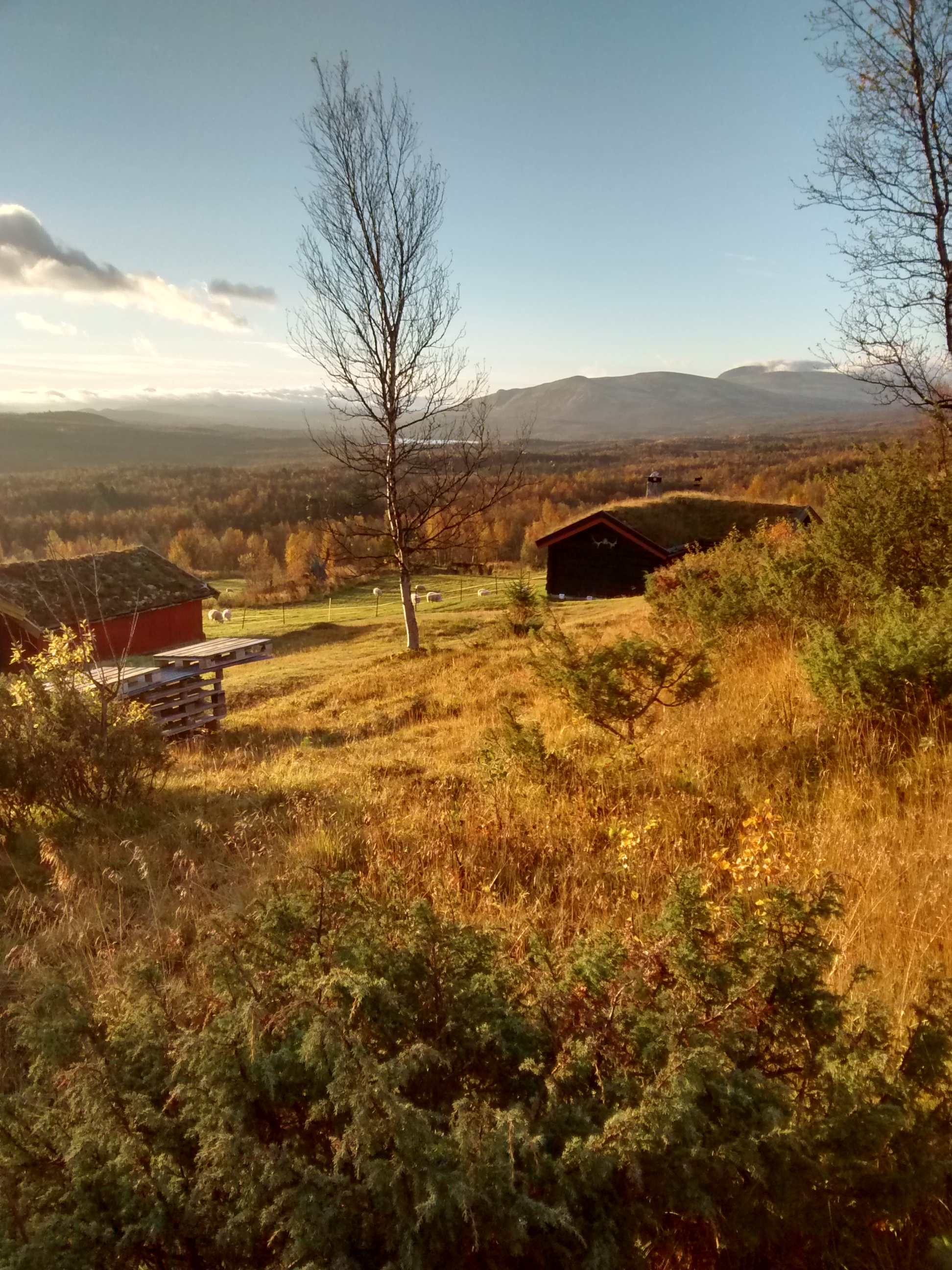 Setra om høsten