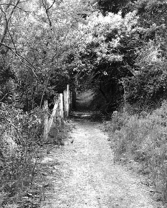 V8609 Path rwcHills.jpg
