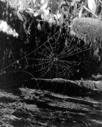V8814 SpiderWeb.jpg