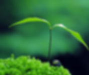 11876-sprouts-leaves 1.jpg