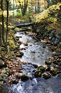 Silent Lake creek.jpg