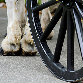 Hooves and Wheels at Arlington Cemetery, photo by Tracey Attlee