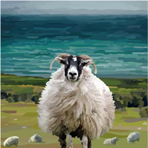 Swaledale Sheep Print