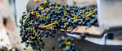 banner-grape-sorter.jpg