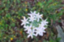 Flowers in the Lycian area