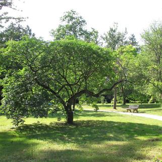 Arboretum des Barres.