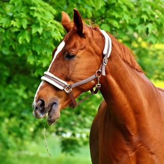 Ballades en cheval