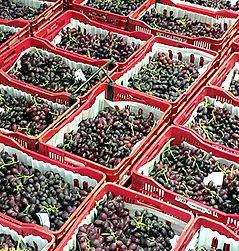 1 cuadro uvas.jpg