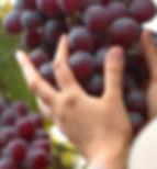 2 cuadro uvas.jpg