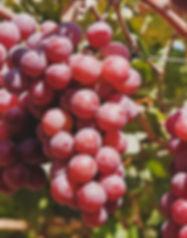 1 uva.jpg