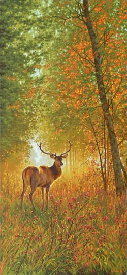 10.70х150 В чаще лесной-
