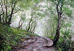 Дорога в лес.jpg