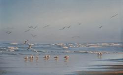 Чайки и море.jpg